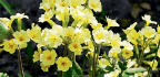 Mineral-rich Soil-enhancing Products Make Having A Beautiful Garden Easy