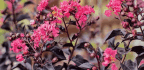 Now Is The Time To Introduce Some Colour And Form Into Your Backyard With Trees