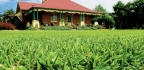 Selecting The Right Lawn For Your Area And Your Needs Is The Key To Long-term Success