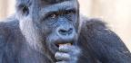 Australia's Open Range Zoos