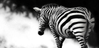 The Wildlife Artist
