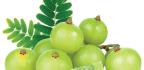 Plantas Medicinales Y Medicina Ayurvédica
