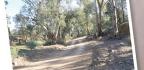 Track In The Flinders Ranges