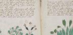 ¿Se Ha Descifrado El Manuscrito Voynich?