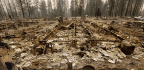 Thousands Of Homes Incinerated But Trees Still Standing