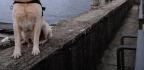 Netflix Docu - Series 'Dogs' Lovingly Serves Up The Human Bond