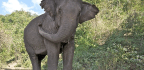 Understanding Local Impacts to Inform Wildlife Conservation