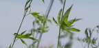Hemp Is About To Be Legal Under 2018 Farm Bill. You Can't Get High From It — But You Can Wear It
