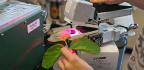 Scientists Have 'Hacked Photosynthesis' In Search Of More Productive Crops