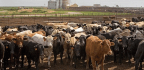 Farmers Have A Beef With Plant- Or Lab-grown 'Meat.' Should You Care?