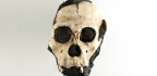 Two Skeletons Aren't Different Hominin Species After All