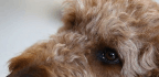 With Human Drugs, A Silicon Valley Startup Hopes To Deliver Precision Medicine To Dogs