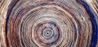 Tree Rings Show Water Loss Stunts Growth