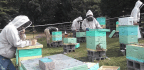 Out-Of-Work Appalachian Coal Miners Train As Beekeepers To Earn Extra Cash