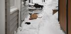 Chicago Grinds To A Halt As Polar Vortex Cold Snap Begins