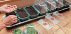 Let The Sowing Begin