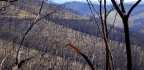 Australia Remembers Black Saturday On The 10th Anniversary Of Catastrophic Bushfires