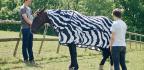 The Surprising Reason Zebras Have Stripes