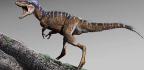 Who's the Cutest Little Tyrannosaur? Is It You?