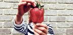 Team Uncovers Strawberry's Odd Evolutionary Origins