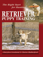 Retriever Puppy Training