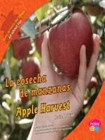 cosecha de manzanas/Apple Harvest