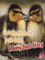 La historia de un pato bebé/A Baby Duck Story