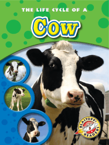 Life Cycle of a Cow, The