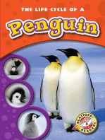 Life Cycle of a Penguin, The