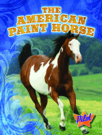 American Paint Horse, The