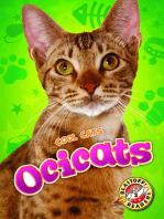 Ocicats
