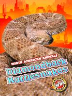 Diamondback Rattlesnakes