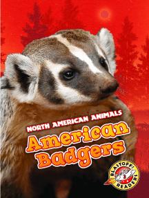 American Badgers