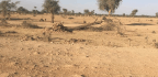 Sudan's Youth Activists Want You To Pay Attention To Deforestation In Darfur