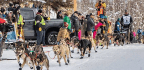Peter Kaiser Takes First In Iditarod — Marking A Win For Alaskan Natives