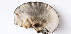 Eat Mushrooms To Keep Your Brain Sharp?