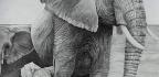 Drawing Elephants