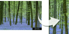 Make Woodland Shots Shine