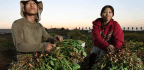 4 Questions For The New Census Of Agriculture