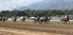 23 Thoroughbred Deaths Force Santa Anita To Change. Will The Racing Industry Follow?