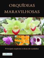 Orquídeas maravilhosas: Principais espécies e dicas de cuidados
