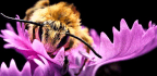 Bee Spit And Flower Oil Are Inspiring New Glues