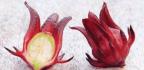 Rosella (Hibiscus sabdariffa)