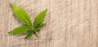 Lizzie Post Got Stoned Every Day to Write About Pot Etiquette