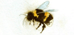 How We Can Save the Honeybees