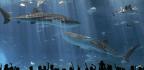 Bursting the Aquarium Bubble
