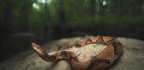 How You (And Your Dog) Can Avoid Snake Bites — And What To Do If You Get Bitten