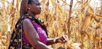 Conservation Agriculture Isn't One-size-fits-all