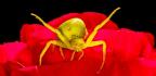 Spiders Inspire Nerve-like Sensors For Drones
