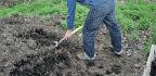 Gardening Myths Debunked